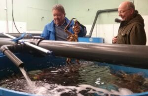 «Krabbekongen» vil få torsk inn i verdens luksusmarked