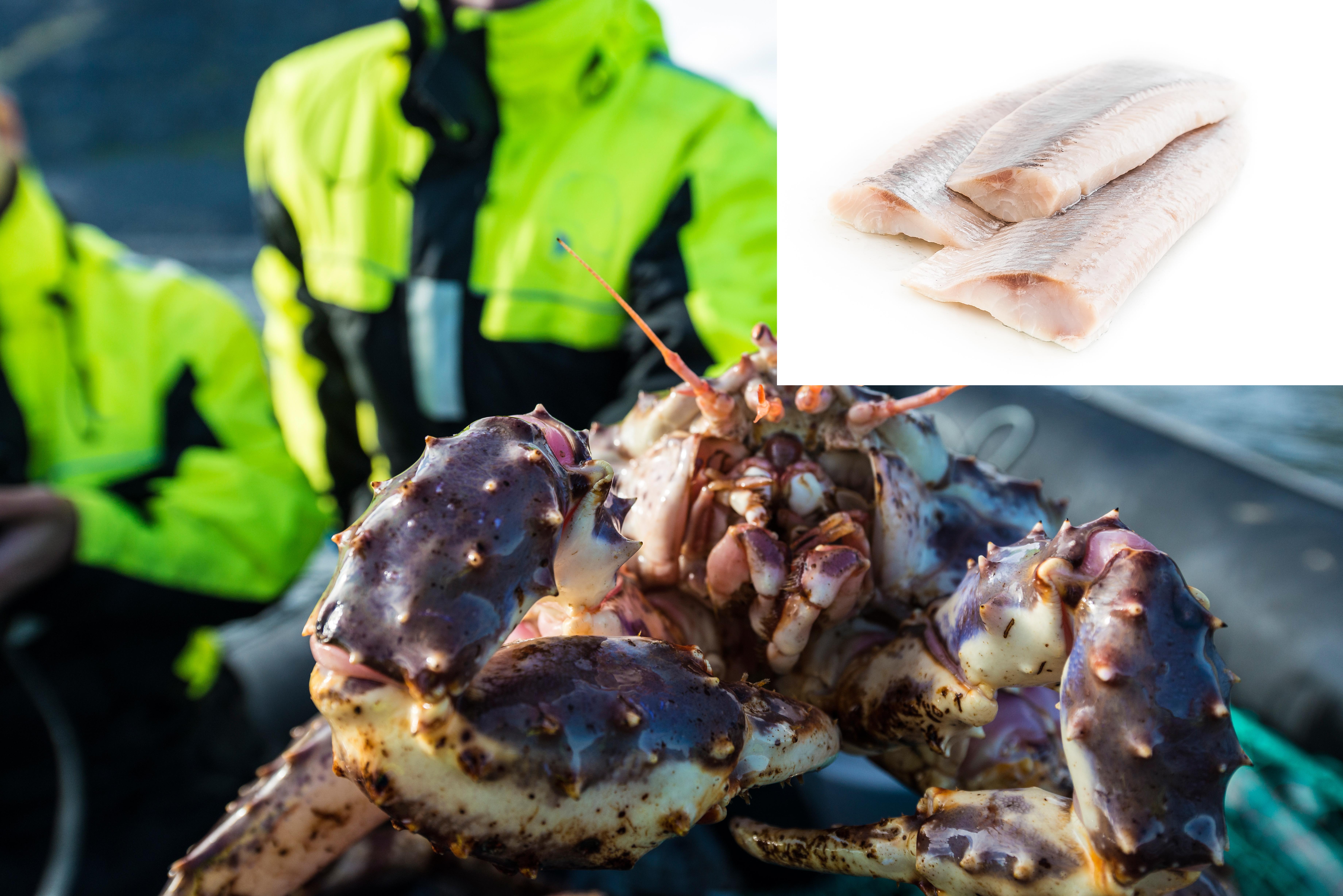 Norway King Crab satser på hvitfisk